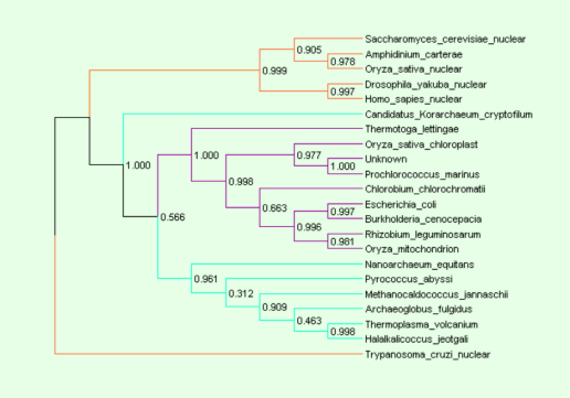 Phylogenetic Tree with Confidence Values produced with Dendroscope