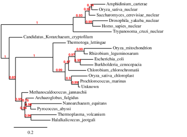 Phylogenetic tree made with MUSCLE clustering tools from LIRMM